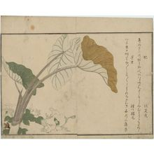 Kitagawa Utamaro: Green Caterpillar (Imomushi) and Horsefly (Abu), from the album Ehon mushi erami (Picture Book: Selected Insects) - Museum of Fine Arts