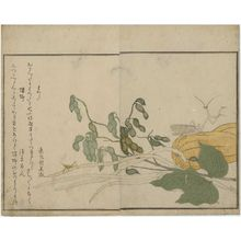 Kitagawa Utamaro: Praying Mantis (Tôrô/kamakiri) and Cone-headed Grasshopper (Batta), from the album Ehon mushi erami (Picture Book: Selected Insects) - Museum of Fine Arts