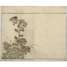 北尾重政: Chrysanthemums, floral endpaper from the book Mirror of Beautiful Women of the Green Houses (Seirô bijin awase sugata kagami) - ボストン美術館