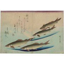 Utagawa Hiroshige: Trout, from an untitled series known as Large Fish - Museum of Fine Arts