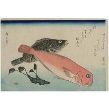 歌川広重: Sweet Sea Bream, Mebaru, and Horseradish, from an untitled series known as Large Fish - ボストン美術館