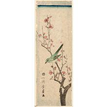 歌川芳員: Warbler on Plum Branch - ボストン美術館