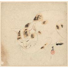 Kawanabe Kyosai: Sleeping Cat - Museum of Fine Arts