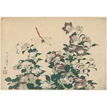 葛飾北斎: Bellflower and Dragonfly, from an untitled series known as Large Flowers - ボストン美術館