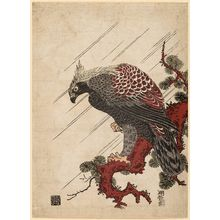 Isoda Koryusai: Eagle on a Pine Branch in the Rain - Museum of Fine Arts