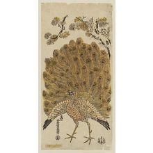西村重長: Peacock Displaying His Plumage - ボストン美術館