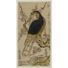 Miyagawa Yasunobu: Hawk on a Plum Branch - Museum of Fine Arts
