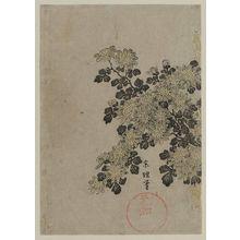 Tawaraya Sôri: Chrysanthemums - ボストン美術館
