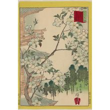 Utagawa Hiroshige II: White Cherry Blossoms at Yanaka Tennô-ji Temple in Tokyo (Tôkyô Yanaka Tennô-ji asagizakura), from the series Thirty-six Selected Flowers (Sanjûrokkasen) - Museum of Fine Arts