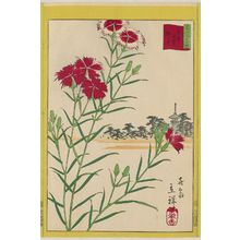 Utagawa Hiroshige II: Wild Carnations at Yanaka in the Eastern Capital (Tôto Yanaka nadeshiko), from the series Thirty-six Selected Flowers (Sanjûrokkasen) - Museum of Fine Arts