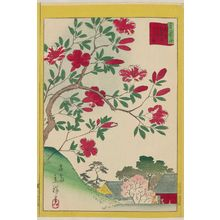 Utagawa Hiroshige II: Kirishima Azaleas at Gokoku-ji Temple in Tokyo (Tôkyô Gôkoku-ji kirishima), from the series Thirty-six Selected Flowers (Sanjûrokkasen) - Museum of Fine Arts