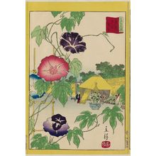 二歌川広重: Morning Glories at Iriya in the Eastern Capital (Tôto Iriya asagao), from the series Thirty-six Selected Flowers (Sanjûrokkasen) - ボストン美術館