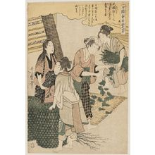 Kitagawa Utamaro: No. 5 from the series Women Engaged in the Sericulture Industry (Joshoku kaiko tewaza-gusa) - Museum of Fine Arts