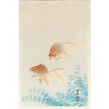 Ohara Koson: Two Goldfish - Museum of Fine Arts