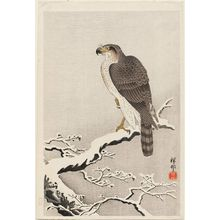 Ohara Koson: Hawk on Snow-covered Branch - Museum of Fine Arts