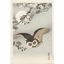 小原古邨: Scops Owl, Cherry Blossoms, and Moon - ボストン美術館