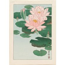 Ohara Koson: Water Lilies - Museum of Fine Arts