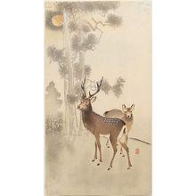 小原古邨: Two deer, pine and moon - ボストン美術館