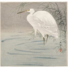 Ohara Koson: Snowy heron standing beside reeds in water - Museum of Fine Arts