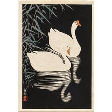 Ohara Koson: Two white geese swimming by reeds - Museum of Fine Arts