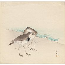 Seiko: Sandpipers on a beach - Museum of Fine Arts