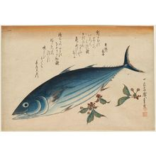 歌川広重: Bonito and Saxifrage, from an untitled series known as Large Fish - ボストン美術館