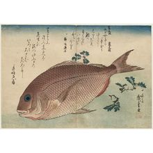 Utagawa Hiroshige: Sea Bream and Sansho Pepper, from an untitled series known as Large Fish - Museum of Fine Arts