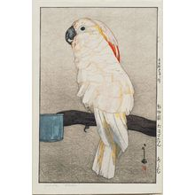 吉田博: Ôbatan Parrot (Ôbatan ômu), from the series Zoo (Dôbutsuen) - ボストン美術館