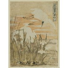 Isoda Koryusai: Returning Sails of the Iris (Kakitsubata kihan), from the series Eight Fanciful Views of Plants (Mitate sômoku hakkei) - Museum of Fine Arts