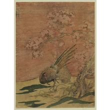 Isoda Koryusai: Pheasants under Cherry Blossoms - Museum of Fine Arts