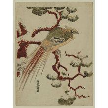 磯田湖龍齋: Golden Pheasant on Snowy Pine Branch - ボストン美術館