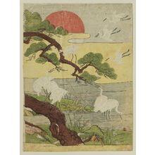 磯田湖龍齋: White Herons, Pine Tree, and Rising Sun - ボストン美術館