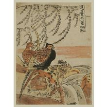 Isoda Koryusai: Clearing Weather of the Willow (Yanagi no seiran), from the series Eight Fanciful Views of Plants (Mitate sômoku hakkei) - Museum of Fine Arts