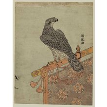 Isoda Koryusai: Falcon on Perch - Museum of Fine Arts