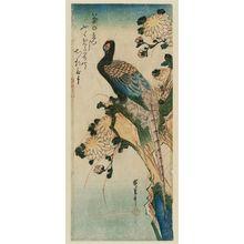 歌川広重: Pheasant and Chrysanthemums - ボストン美術館