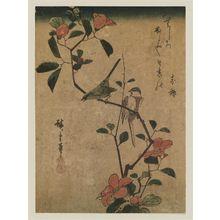 Utagawa Hiroshige: Birds on Camellia Branch - Museum of Fine Arts