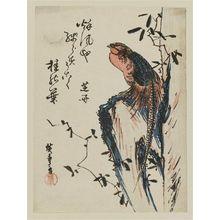 歌川広重: Golden Pheasant on Rock - ボストン美術館