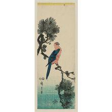 歌川広重: Macaw on Pine Branch - ボストン美術館