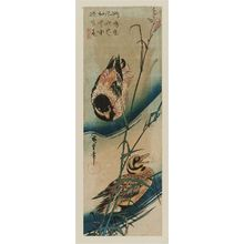 Utagawa Hiroshige: Ducks and Reeds - Museum of Fine Arts