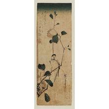 Utagawa Hiroshige: Camellia and Finch - Museum of Fine Arts