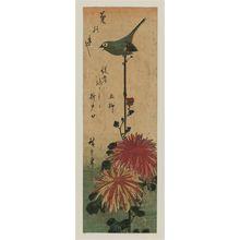 Utagawa Hiroshige: Chrysanthemums and Japanese White-eye - Museum of Fine Arts