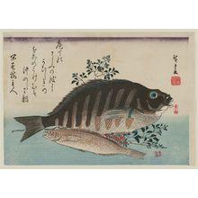 歌川広重: Striped Sea Bream, Rock-trout, and Nandina, from an untitled series known as Large Fish - ボストン美術館