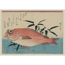 Utagawa Hiroshige: Goggle-eyed Sea Bream and Bamboo Grass, from an untitled series known as Large Fish - Museum of Fine Arts