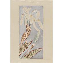 Asada: Iris (Airisu) - ボストン美術館