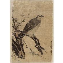 Kitagawa Utamaro: Hawk on a Plum Branch - Museum of Fine Arts