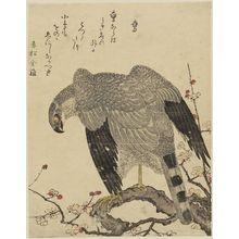 Kitagawa Utamaro: Falcon (Taka), from the album Momo chidori kyôka awase (Myriad Birds: A Kyôka Competition) - Museum of Fine Arts