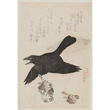 窪俊満: Raven and Sparrows, from the series Tori awase - ボストン美術館