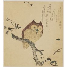 Kubo Shunman: Horned Owl on Flowering Branch - Museum of Fine Arts