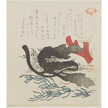 窪俊満: Three Types of Seaweed (Umihozuki miru arame), from the series Seawed for the Kasumi Circle (Kasumiren kaisô awase) - ボストン美術館
