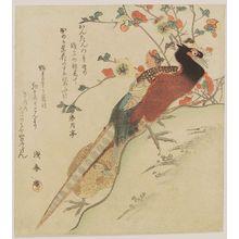窪俊満: Pheasants by a Bush - ボストン美術館